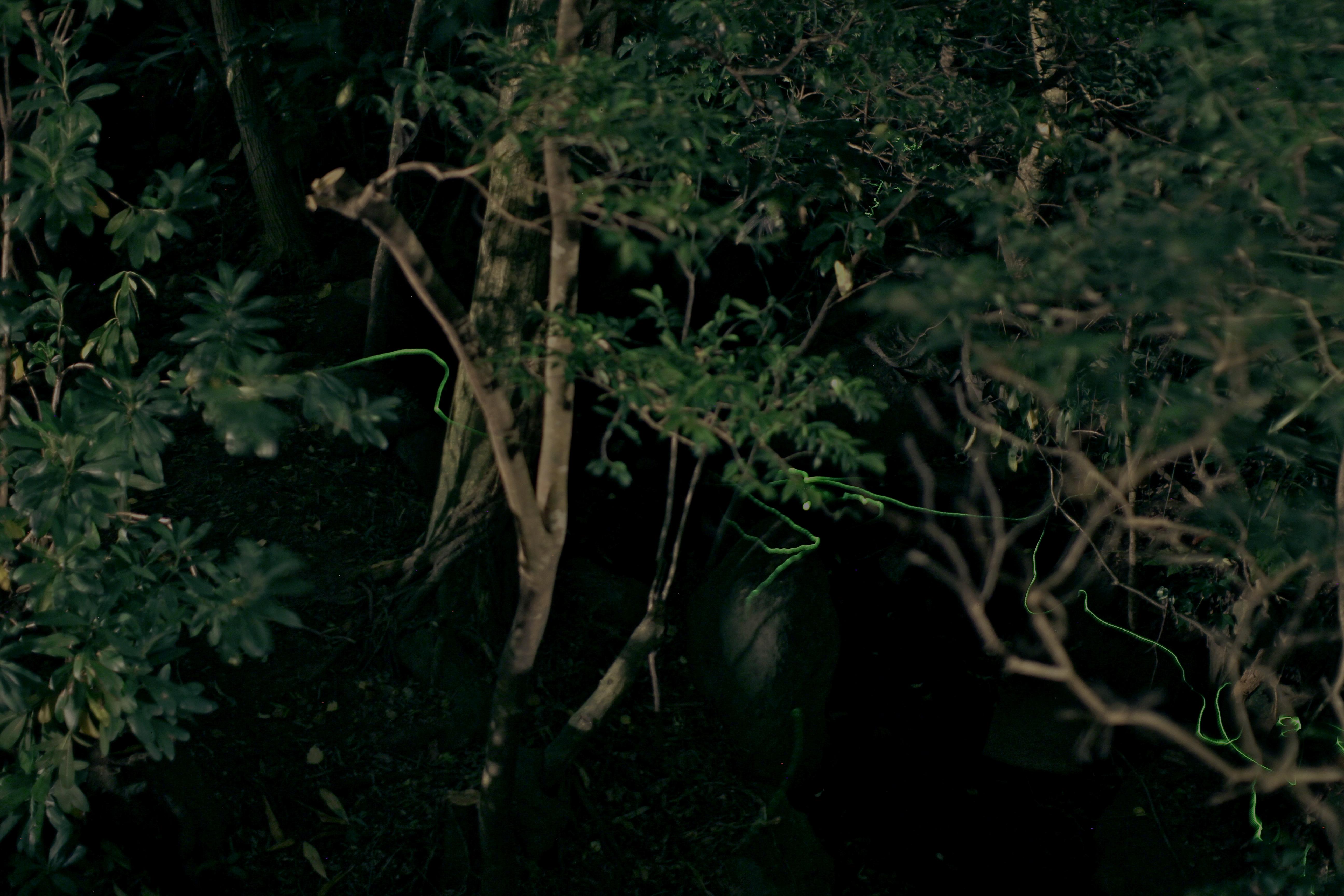 箱根にホタルが舞っています。