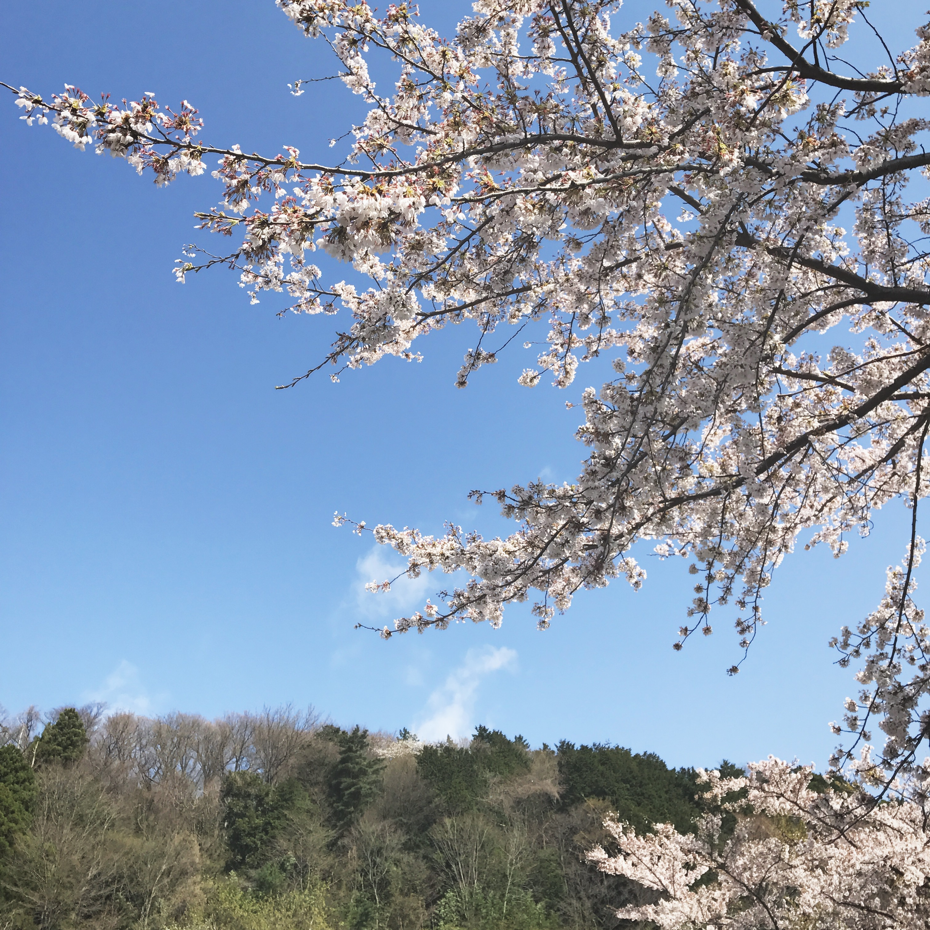 箱根小涌園 天悠、本日開業です。