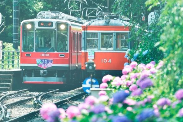箱根の初夏を彩る アジサイの名所へおでかけ!