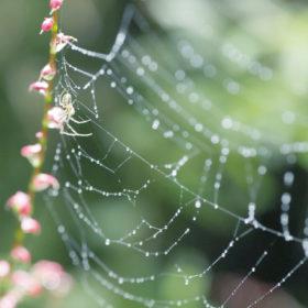 #No.34 #蜘蛛の巣 #キラキラ