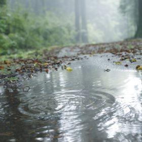 #No.62 #水たまり #雨の箱根