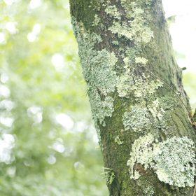 #No.63 #苔 #森 #箱根の自然