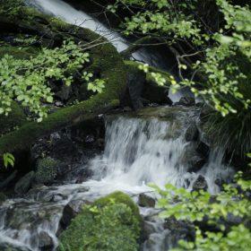 #No.51 #蓬莱園 #滝 #箱根の自然