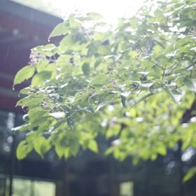 #No.66 #雨の箱根 #恵み