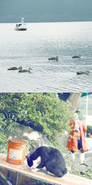 Spot8 #芦ノ湖