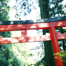 #No.34 #箱根神社 #鳥居