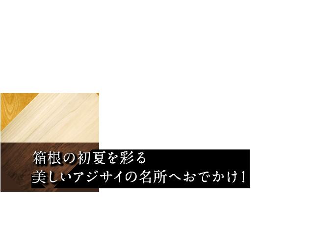 箱根の初夏を彩る美しいアジサイの名所へお出かけ!