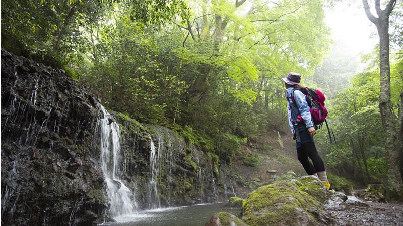 呉坊の滝を見上げる